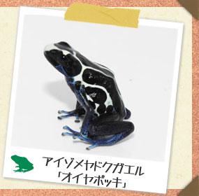 20181012-aizomeoiyaosusume.jpg