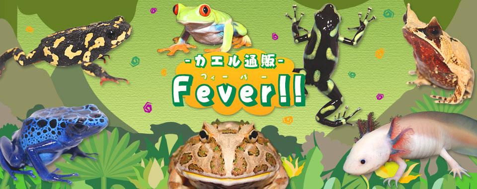 カエル通販 Fever!!